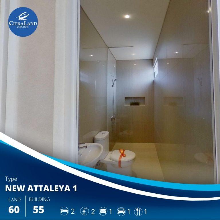 New Attaleya